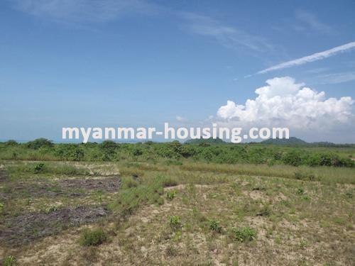 မြန်မာအိမ်ခြံမြေ -ခြံမြေနှင့် စက်ရုံဆက်စပ် ပိုင်ဆိုင်မှုများ property - No.1102 - N/A - view of the wide land